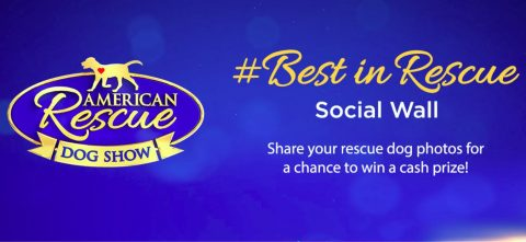 Hallmark Channel Best In Rescue At Home Contest